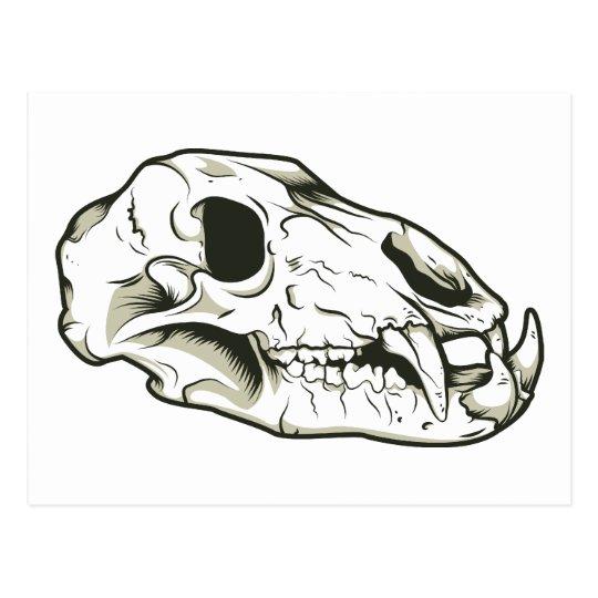 Skull 2 ~ Skulls Skeleton Mammal Animal Postcard