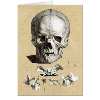 Skull and Bones Orthopedic Drawing Card