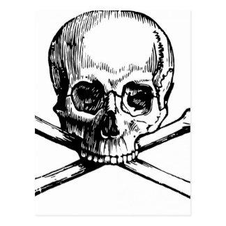 Skull and Bones Postcard