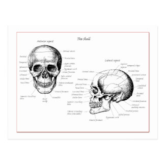 Skull Details Front and Side Post Card