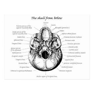 Skull Details Side Postcard