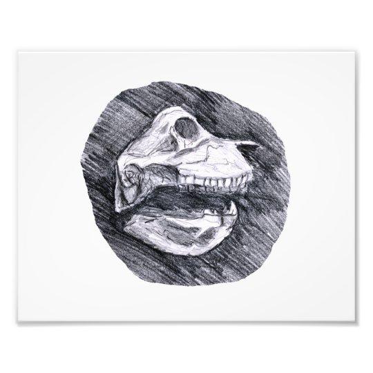 Skull drawing imaginary animal sketch photo print