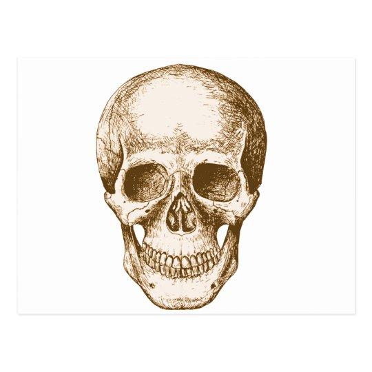 Skull Face Sepia Postcard
