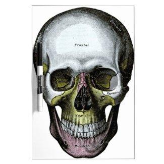 Skull - Halloween - Med School Dry Erase Board