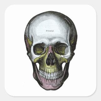 Skull - Halloween - Med School Square Stickers