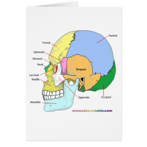 Skull (lateral) card