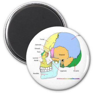 Skull (lateral) 2 inch round magnet