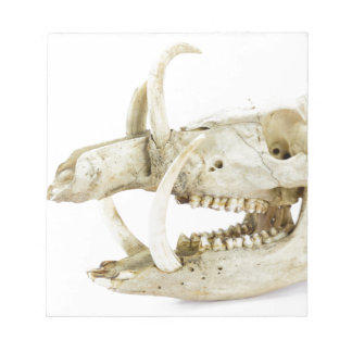 Skull of wild boar notepad