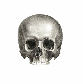 Skull Shape Cutout