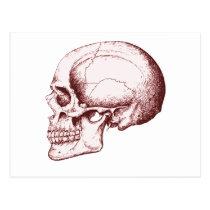 Skull Sid eRed Postcard