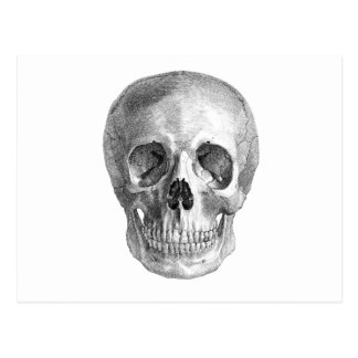 Skull Sketch perfect for Halloween party needs! Postcard