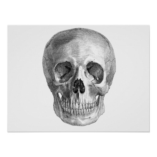 Skull Sketch perfect for Halloween party needs! Poster