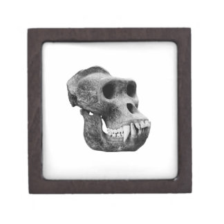 Skull the gorillas. keepsake box