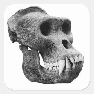 Skull the gorillas. square sticker