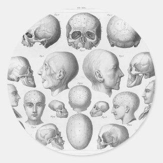 Skull Types Classic Round Sticker