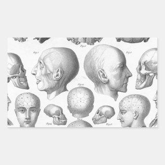 Skull Types Rectangular Sticker