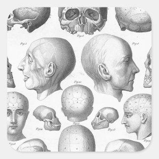 Skull Types Square Sticker