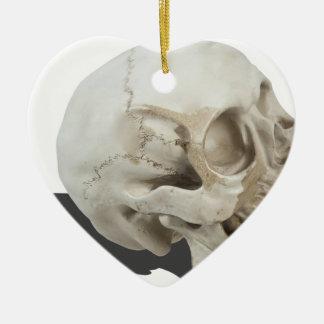 SkullCranialLines051213.png Ceramic Ornament