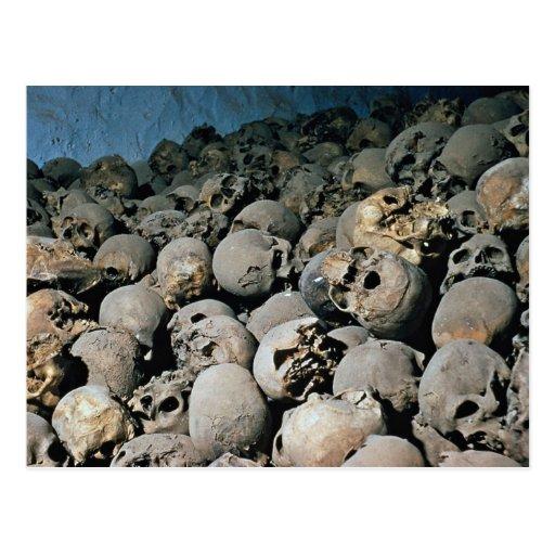 Skulls in Mount Sinai, Middle East Postcard