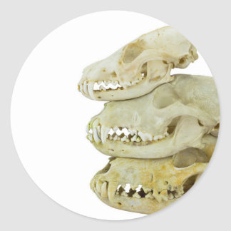 Skulls of fox and dogs on top of each other classic round sticker
