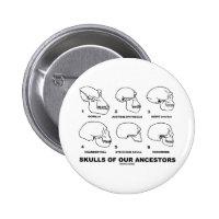 Skulls Of Our Ancestors (Six Skulls Evolution) 2 Inch Round Button