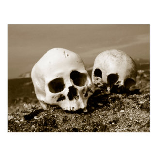 Skulls on the Punuk Islands shore, Bering Sea Postcard