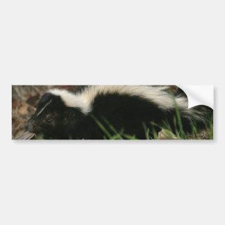 Skunk Behavior  Bumper Stickers
