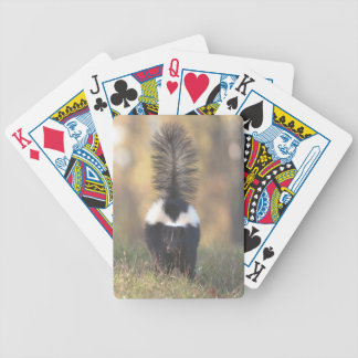 Skunk Bicycle Playing Cards