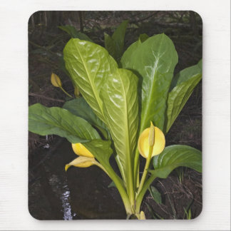 Skunk Cabbage - Mousepad