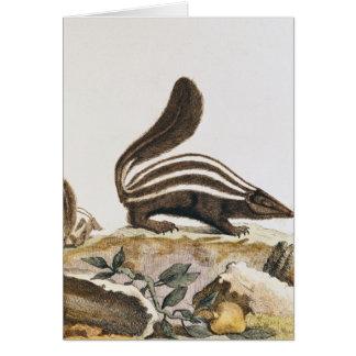 Skunk, from 'Histoire Naturelle' by Card
