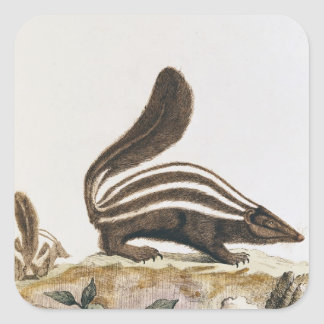 Skunk, from 'Histoire Naturelle' by Stickers
