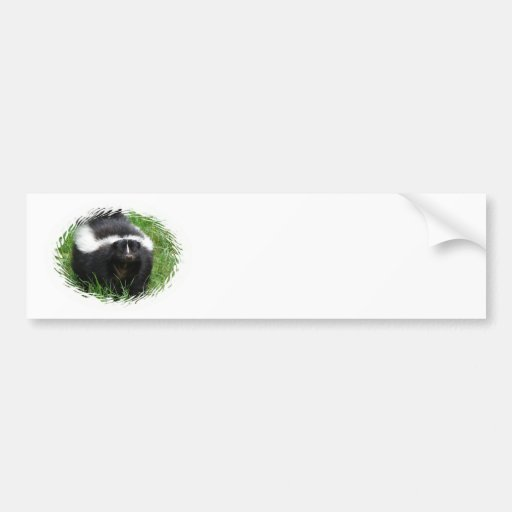 Skunk Photo Bumper Sticker
