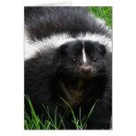 Skunk Photo Greeting Card