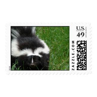 Skunk Photo Postage Stamp