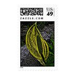 Skunk Salad Stamp