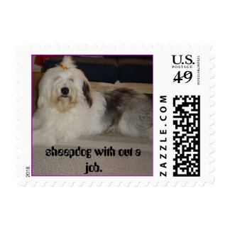 Sky's pictures 054, sheepdog with out a job. postage stamp