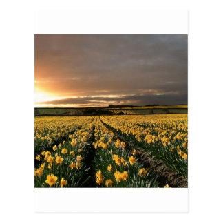 Sky Field Of Dreams Postcard