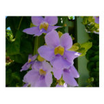 Sky Flower Vine Postcard
