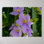 Sky Flower Vine Print