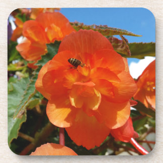 sky, flowers and bee beverage coaster