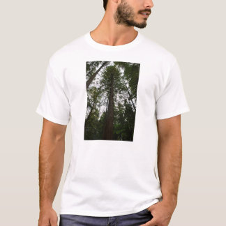 Sky through Redwood Grove T-Shirt
