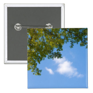 sky view with tree top button