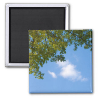 sky view with tree top magnet