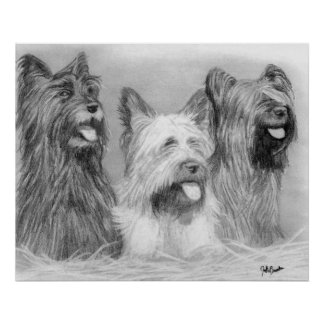 Skye Terrier Dog Portrait Poster