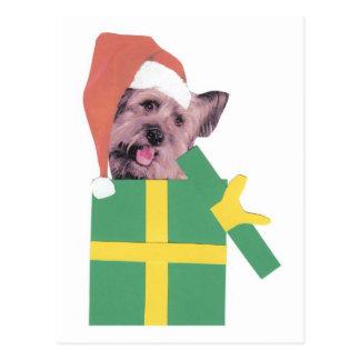 Skye Terrier Green Box Postcard