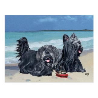 Skye Terriers, Beach Day! Postcard