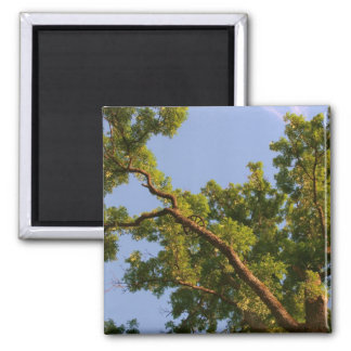 Skyward Tree 2 Inch Square Magnet