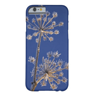 Skyward view of Cow Parsnip in winter covered in Barely There iPhone 6 Case