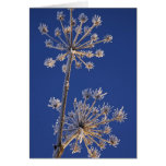 Skyward view of Cow Parsnip in winter covered in Greeting Card