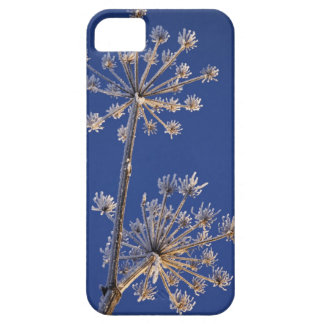 Skyward view of Cow Parsnip in winter covered in iPhone 5 Cover